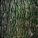 Śliczny oraz {zadbany zieleniec to nie lada wyzwanie, przede wszystkim jak jego konserwacją zajmujemy się sami.
